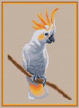Вышивка попугаев бесплатно